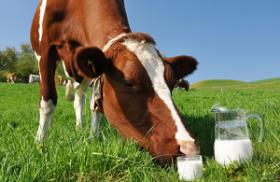О молоке