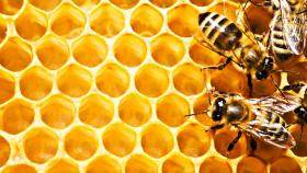 Мед в аюрведе